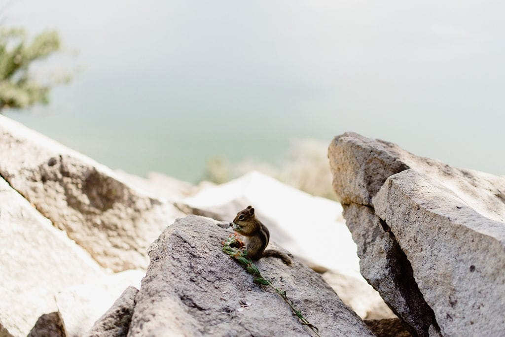Chipmunk in Colorado at Sapphire Point