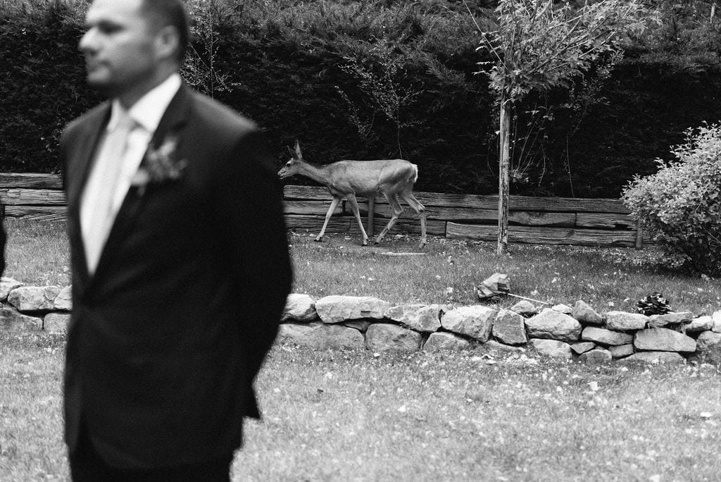 Deer at Cheyenne Mountain Country Club Wedding Ceremony