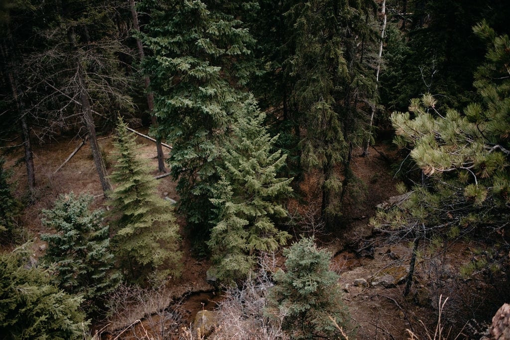 View below of trees and river on a hike in evergreen