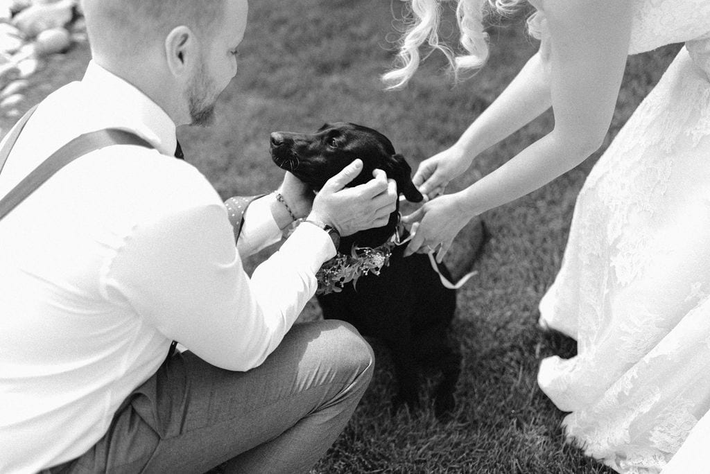 Dog at Ten Mile Station wedding in Breckenridge