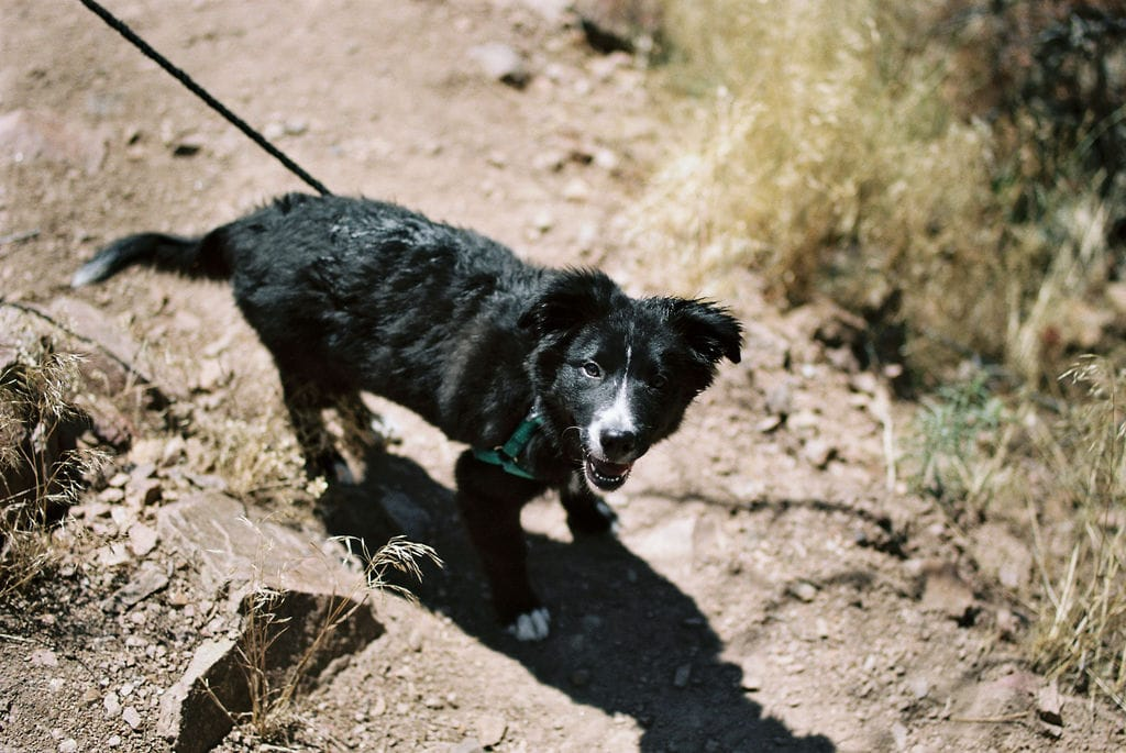 Cute dog on boulder hiking trail