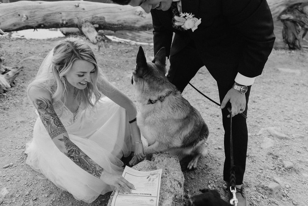 Dog signing marriage license at colorado elopement